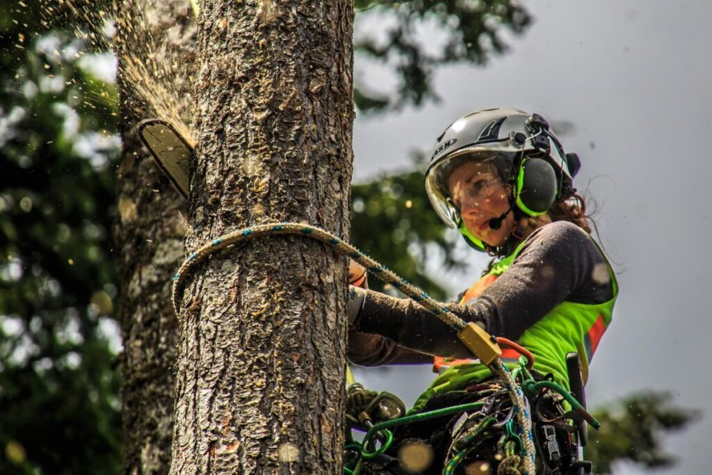 Tree Removal Adelaide
