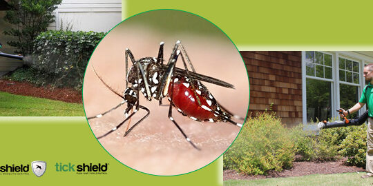 Mosquito Control South Shore